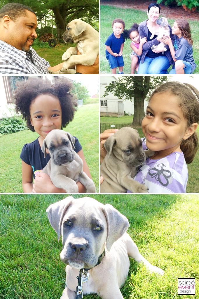 Deizel Puppy